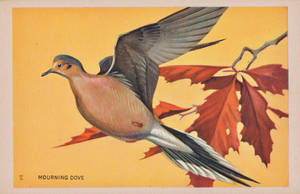 Mourning Dove by Yesterdays-Paper