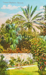 Vintage Bermuda - Tropical Vegetation by Yesterdays-Paper