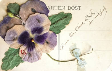 Antique Postcard Back 053 - Big Pansy by Yesterdays-Paper