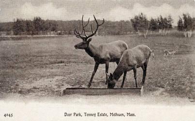 Vintage New England - Deer Park, Tenney Estate by Yesterdays-Paper