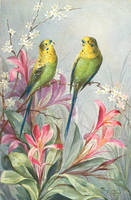 Beautiful Budgerigars by Yesterdays-Paper