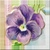 Vintage Pansy Icon - Left