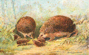 Hedgehog Family In the Woods by Yesterdays-Paper