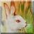 Vintage White Rabbit Icon