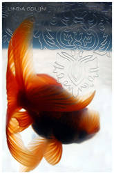 Goldfish I by KonikPolski