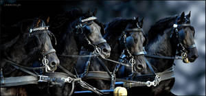 Charging Stallions by KonikPolski