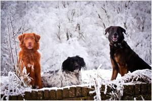 Three Amigos by KonikPolski