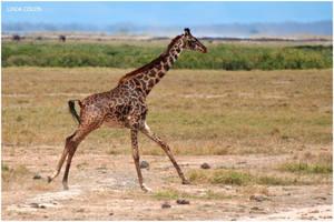 Galloping Giraffe by KonikPolski