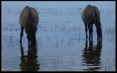 Seahorses by KonikPolski