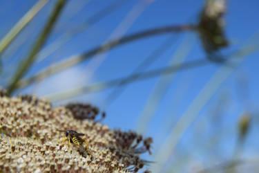 Dune Wasp by GonzoShepherd