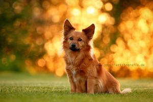against the light by Partridge-PetPics