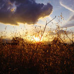 Golden Sunset by LorenzoDiFolco