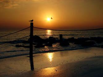 seabird sunset by gbarill