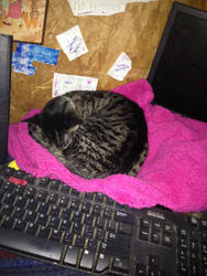 My Kit Kat sleeping on my jacket. :3 mew by Kreaya