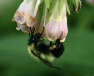 Bumble Bee by SillyPuttyEnemies