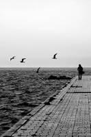 Fly me away by e-l-a-n-i
