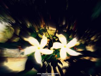 White Life by shutterpunch