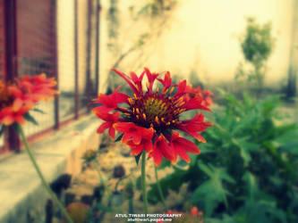 Loving Flower by shutterpunch