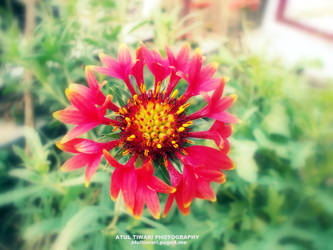 COLORFUL FLOWER by shutterpunch