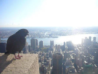 bird and the city by Leo-electronic