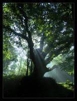 An old oak... by Ashti
