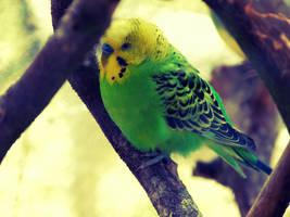 Birds by Elo7