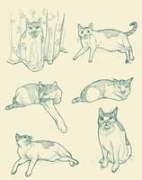 Louie Sketches 2 by Llewxam888