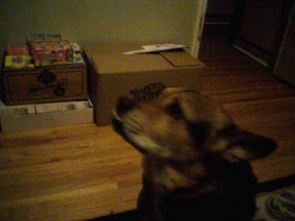dog stareing by Jaffar8