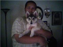i r wolf puppy by Jaffar8