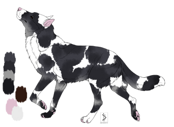 Piebald Australian Shepherd from Winchesterfoxx by KikiRuvein