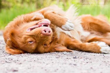 Crazy dog by Kaasik91