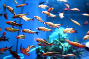 School Of Fish by MeowPic