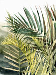 Arecaceae - household jungle in greens #2 by Zawij