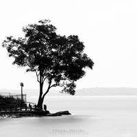 Tree by kentnek
