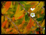 Autumn Hope by Grey-Photographic