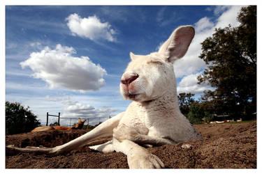 kangaroo court by bryan-cuttance