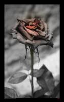 Fading Beauty by melolonta