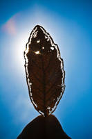 Holy Leaf of Life by melolonta