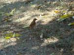 Bird by canalphotoshop