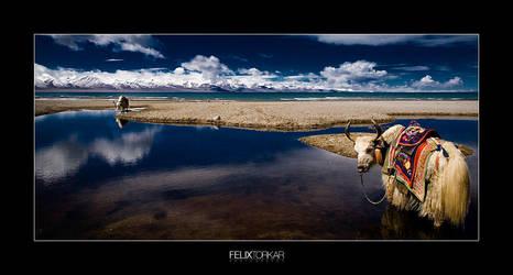 Nam-Tso Lake by FelixTo