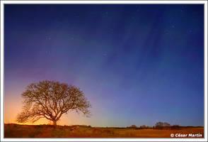 Holy Night by CesarMartin