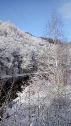 Winter  by Snowlion90