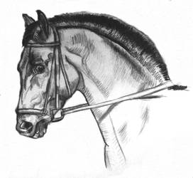 horse1 by StoneBattleAxe