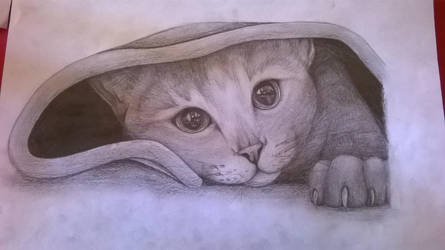 Cat by AaChara