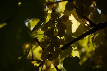 Autumnal Love by LiaLavender