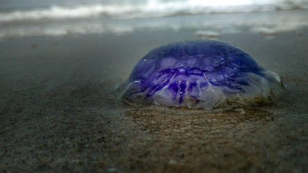 purple jelly 125915 by KiwisaftDEsign