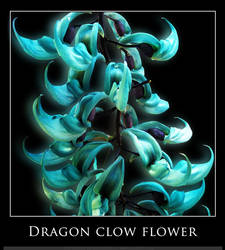 Dragon Clow Flower by x4