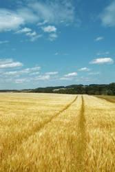 Fields of Gold by kuschelirmel-stock