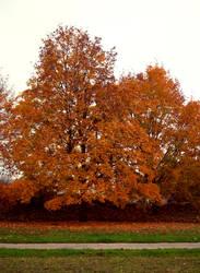 Autumn Trees 03 by kuschelirmel-stock