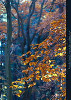 Herbstspaziergang III by kuschelirmel-stock